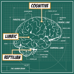 brain-illustration.jpg