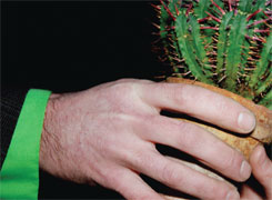 Hand holding a cactus